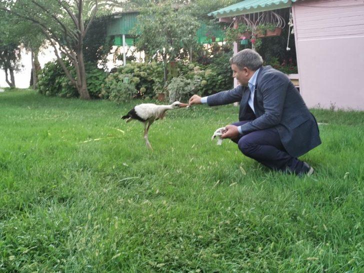 Sürüden ayrılan leyleği belediye başkanı elleri ile besledi