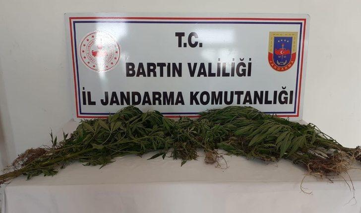 Bartın'da Hint keneviri operasyonu: 2 gözaltı