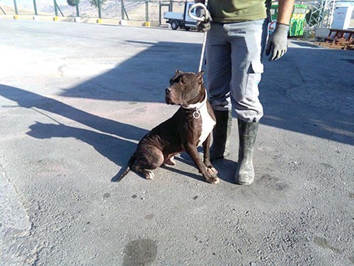Kayseri'de 'tehlikeli ırk' köpek besleyenlere ceza
