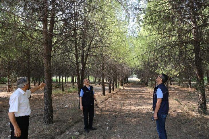 Üniversite ormanı bilimsel yöntemlerle rehabilite ediliyor