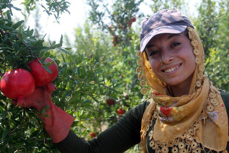 Silifke'de yılın ilk nar hasadı yapıldı