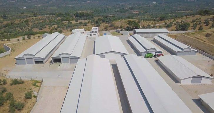 Türkiye'nin en modern keçi çiftliği İzmir'de kuruldu