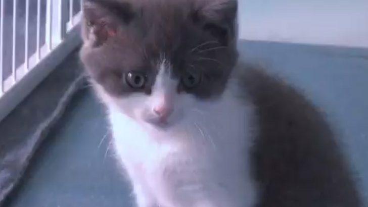 Çinli iş adamı, ölen kedisini 35 bin dolara klonlattı