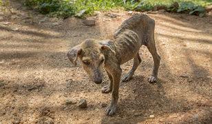 100'den fazla köpeğini aç ve susuz bırakan kadına hapis