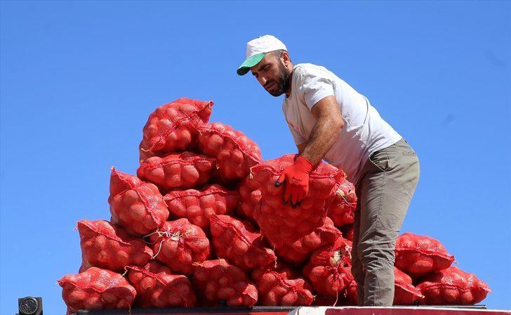 Üretim artınca patatesin fiyatı düştü