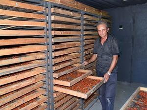 Aksaray'dan Avrupa ülkelerine 'goji berry' gönderiyor