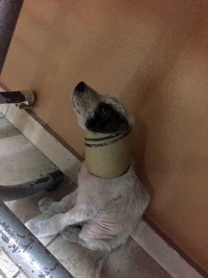 Kafası beton boruya sıkışan köpeği itfaiye kurtardı