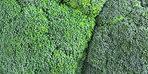 Süper güç olarak tanımlanan brokolinin sağlığımıza kattığı faydalar