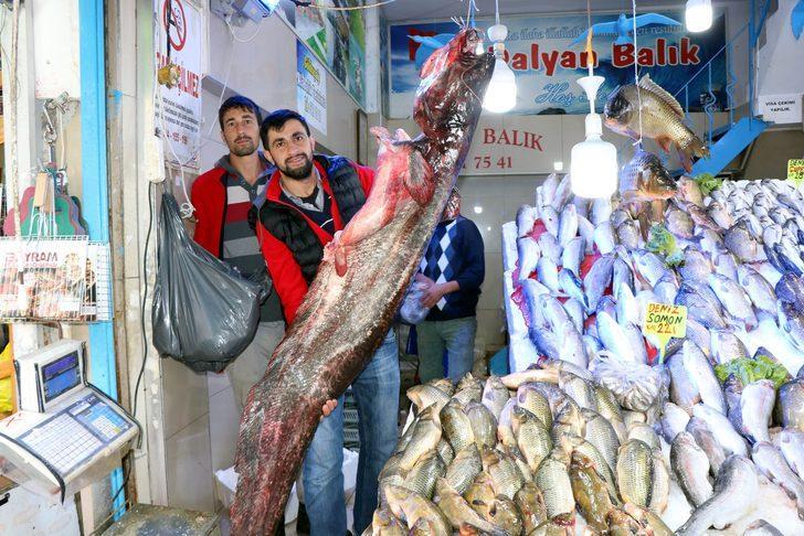 Samsun'da bu senenin en büyük yayın balığı yakalandı