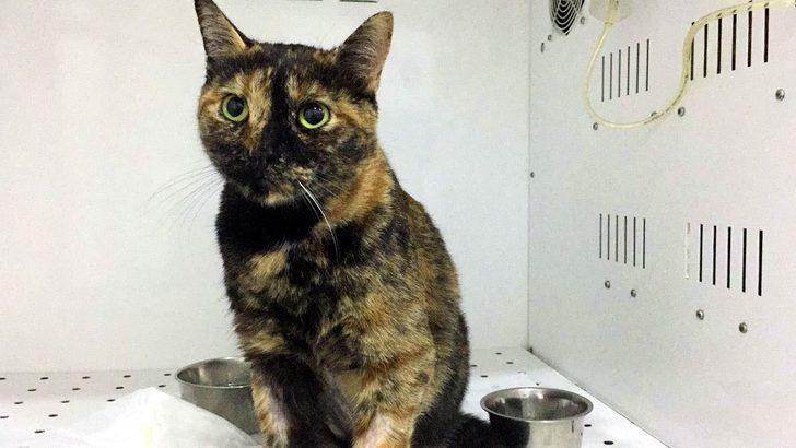 Kedinin soluk borusundaki taş 6 saatlik ameliyatla çıkartıldı