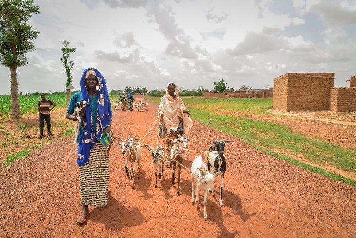 Afrika'da hayvancılığın gelişimine Türkiye'den katkı