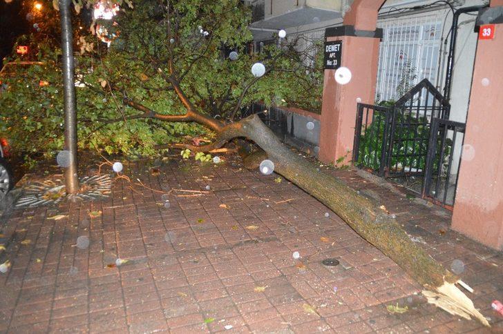 İstanbul'da etkili olan yağmur, bazı ağaçları yola devirdi