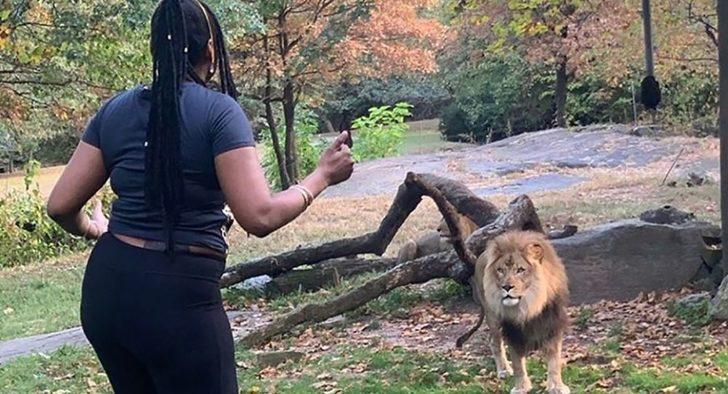 Hayvan bile dondu kaldı! Aslanın kafesine girip...