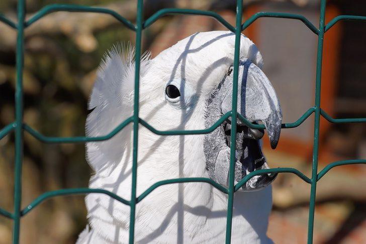 2 ayrı silahla 5 kez vurulan papağan kurtulmayı başardı!