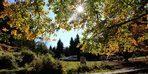 Sonbaharın en renkli noktası: Şavşat