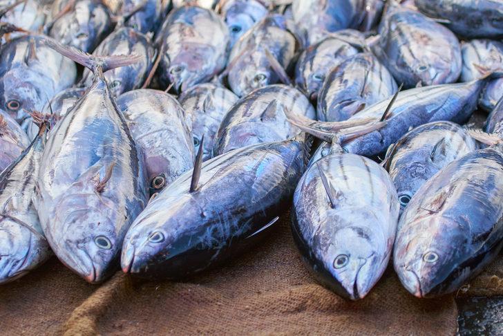 Çocuklar her balığı tüketmemeli