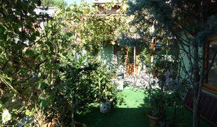 Yeşile doyamadı, evini botanik bahçeye çevirdi