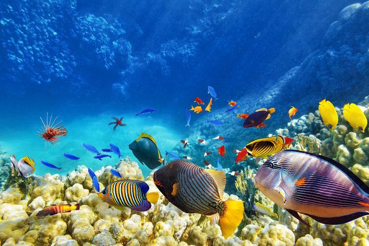 Dünyanın su altı harikaları