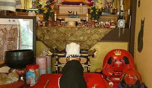 Bu kedi tapınağı olan bir rahip!