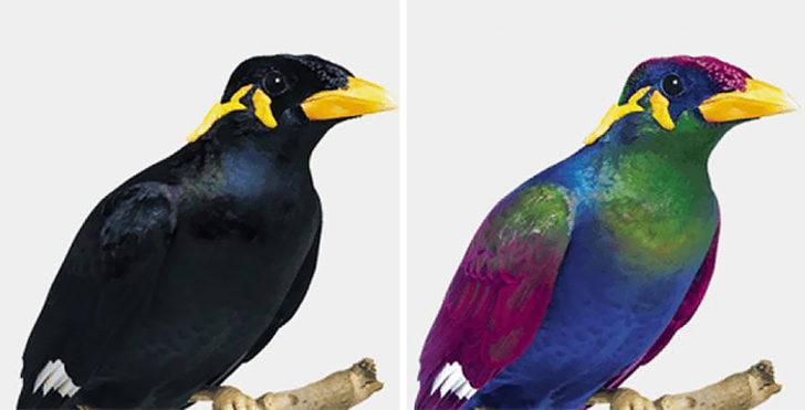 Kuşlar dünyayı nasıl görür?