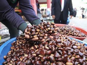 Bozkurt halkı kestaneden yılda 2 milyon lira kazanıyor