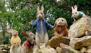 Tavşan Peter, bir kez daha beyaz perdeye zıplıyor