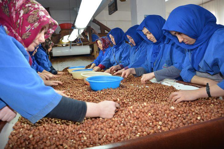 Çinliler, Türk fındığı peşinde