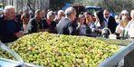 Uluslararası Zeytin Hasat Festivali başlıyor