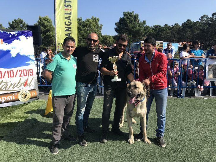 Türk çoban köpekleri Ümraniye'de yarıştı