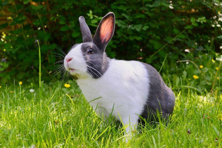 Vegan aktivistlerin eylemi yüzünden tavşanlar felç oluyor!