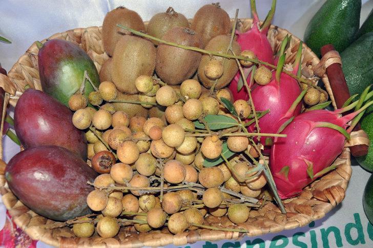 500 gramlık mangonun tanesi 30 liraya alıcı buldu