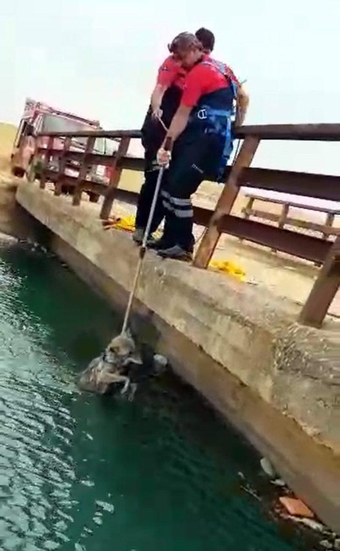 Sulama kanalına düşen kurdu itfaiye kurtardı