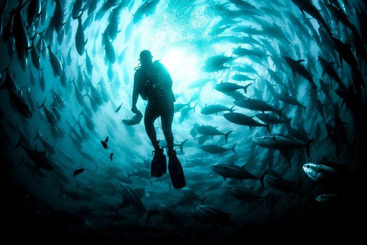 Balık varlığının sürdürülmesi için hazırlanan yasa teklifi yarın TBMM'ye geliyor