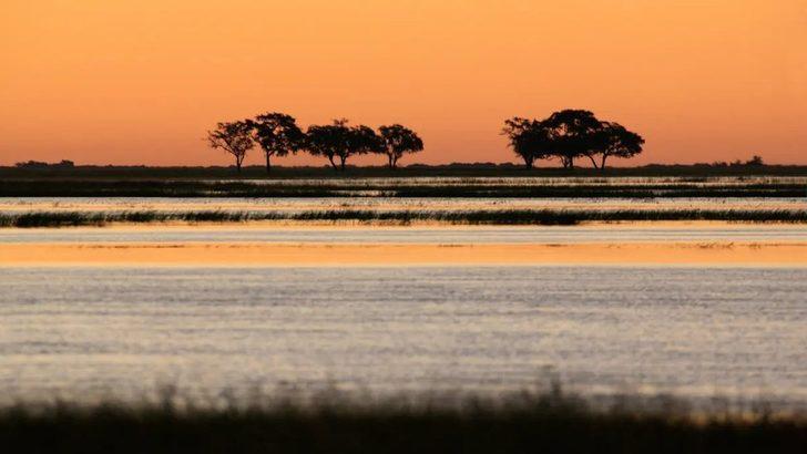 Modern insanın ataları 'Botsvana'dan yayıldı'