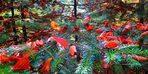 Kazdağları her mevsim başka renk giyiniyor