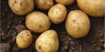 Bu süreçte patates tüketmeyin