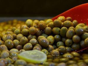 Marmarabirlik, yağlık zeytin alım fiyatını 4 liraya çıkardı