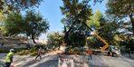Asırlık anıt çınar ağacının dalları kesildi