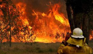 16 yaşındaki genç yangını başlatmakla suçlanıyor