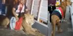 Irak'ta göstericiler sokağa aslanla çıktı