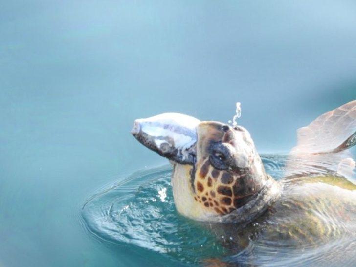 Validen dikkat çeken balon balığı paylaşımı