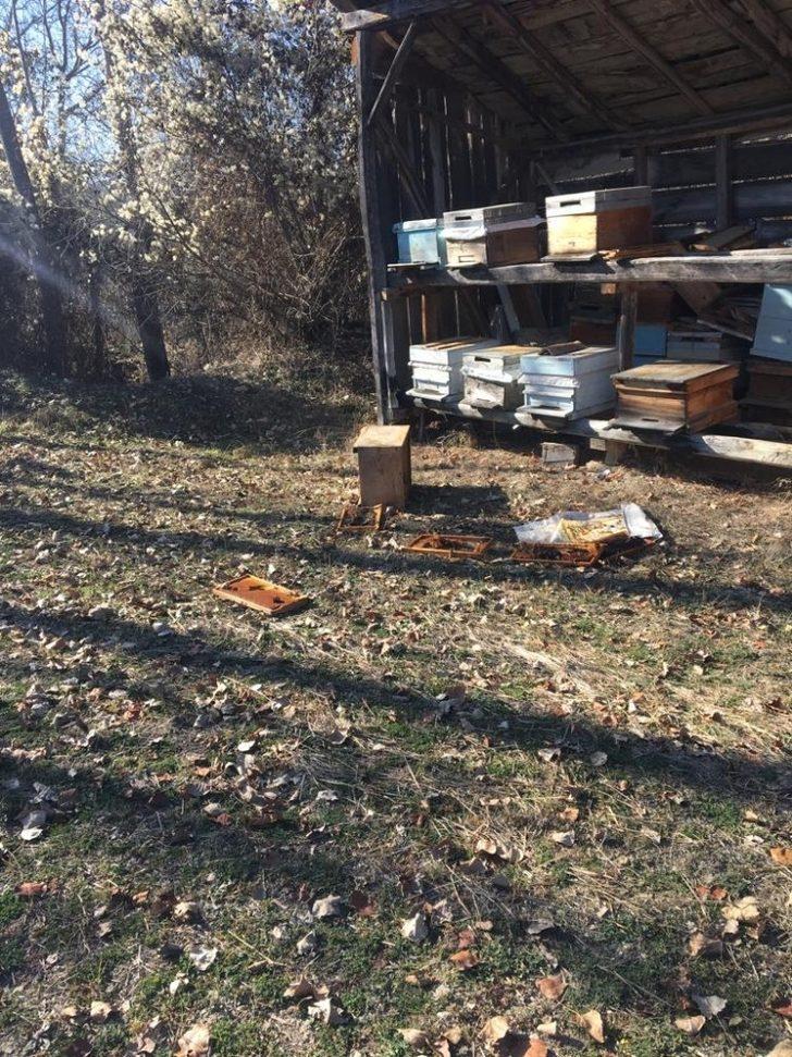 Daday'da köye kadar inen ayı, arı kovanını parçaladı