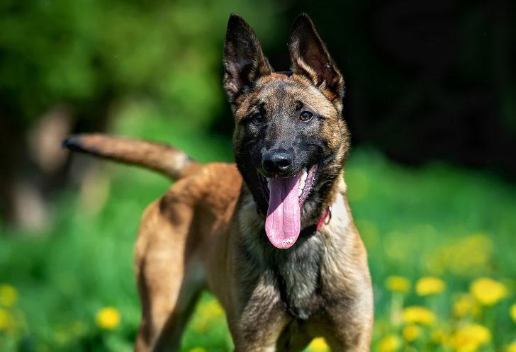 Fransa'da hamile bir kadın avcı köpeklerinin saldırısında öldü