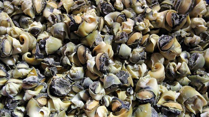 Türkiye'den 6 ülkeye 18 milyon dolarlık deniz salyangozu ihracatı