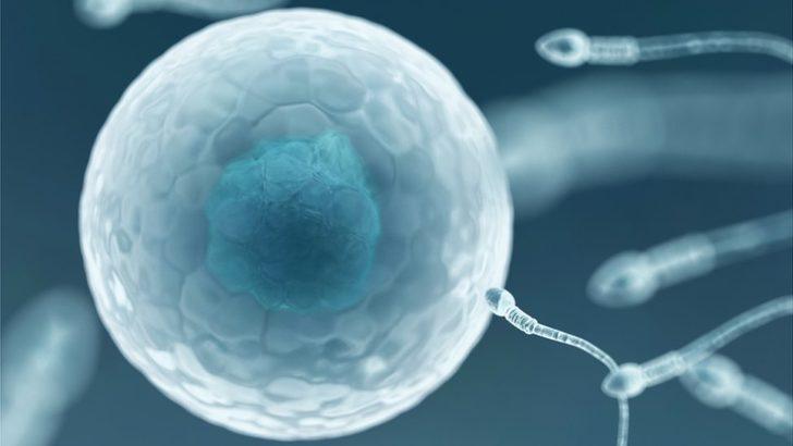 Dünyanın ilk HIV-pozitif sperm bankası Yeni Zelanda'da açıldı