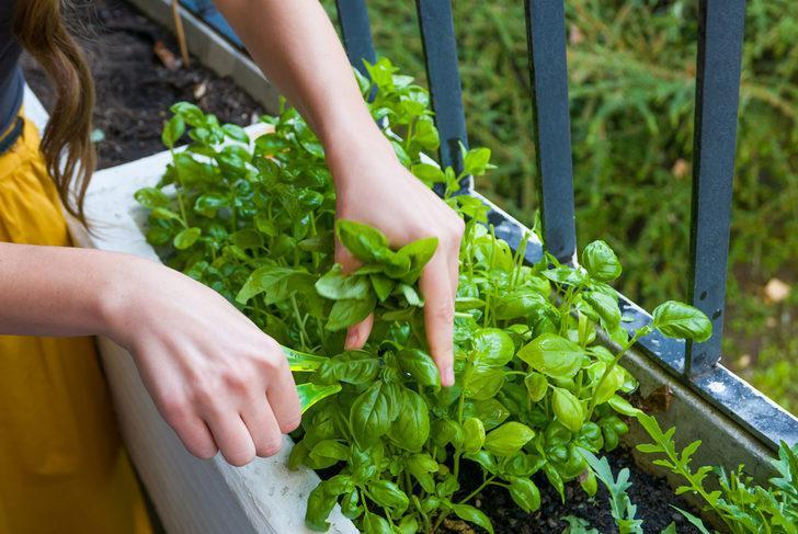 Evde yetiştirilebilecek 5 sebze