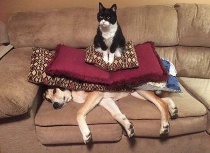 Bu yaramaz kediler sizleri kahkahalara boğacak!
