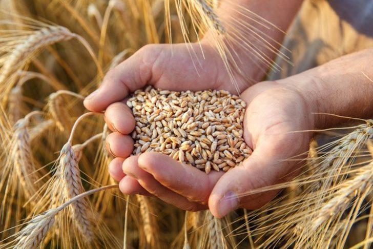 Yılın ilk buğdayı hasat edildi! İşte buğdayın 2021 fiyatı