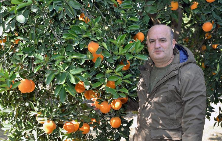 'Yeni cins narenciyede hasat, farklı aylara yayılabilir'