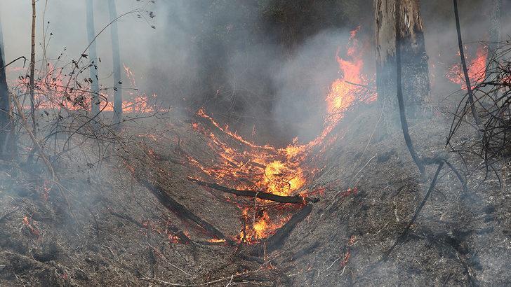 Avustralya'daki yangınların bilançosu artıyor